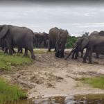 elephants_getting_water