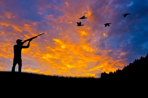 african wingshooting safari