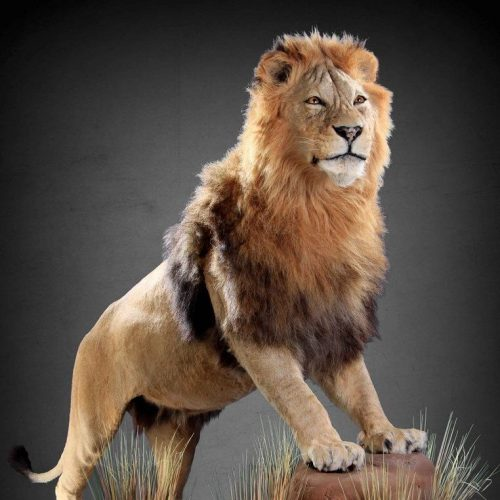 full_lion_mount